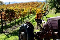 Sonoma vineyard Stock Image