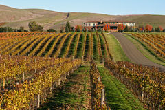 Sonoma Vineyard. The rolling landscape of a Sonoma Valley, California vineyard Stock Photography