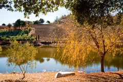 Sonoma vineyard. Vineyard and pond in Sonoma CA Stock Photo