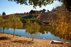Sonoma-wijngaard royalty-vrije stock foto