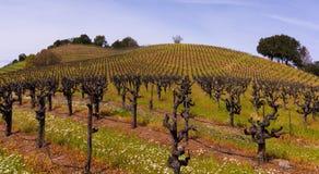 Sonoma-Wijngaarden stock foto