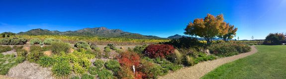 Sonoma wine country panorama. Panoramic view of St. Francis vineyard in Sonoma wine country California royalty free stock photos