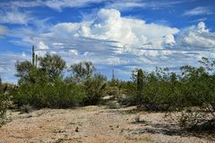 Sonora Desert Arizona stock images