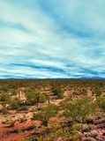 Sonora Desert Arizona Royalty Free Stock Image