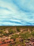 Sonora Desert Arizona. The Sonora desert in central Arizona USA Royalty Free Stock Image