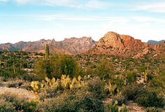 Sonora Desert Arizona. The Sonora desert in central Arizona USA Royalty Free Stock Photo