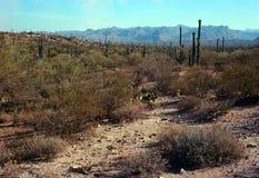 Sonora Desert Arizona. The Sonora desert in central Arizona USA stock photography