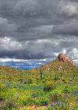 Sonora Desert Arizona Stock Image