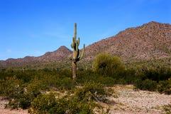 Sonora Desert Arizona. The Sonora desert in central Arizona USA Stock Image