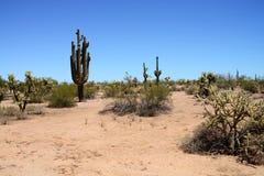 Sonora Desert Arizona USA. The Sonora desert in central Arizona USA stock image