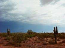Sonora Desert Stock Image