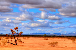 Sonora Desert. The Sonora desert in central Arizona USA Royalty Free Stock Image