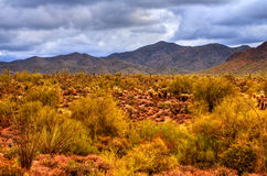 Sonora Desert. The Sonora desert in central Arizona USA Royalty Free Stock Images