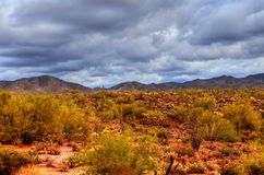 Sonora Desert Stock Photo