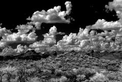 Sonora Desert Royalty Free Stock Photo