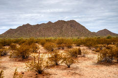Sonora Desert. In central Arizona USA Royalty Free Stock Photos