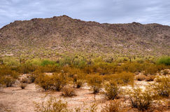 Sonora Desert. In central Arizona USA Royalty Free Stock Images