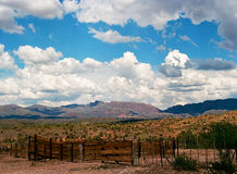 Sonora Desert Royalty Free Stock Image