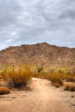 Sonora Desert. In central Arizona USA Stock Photo