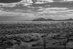 Sonora Desert. The Sonora desert in central Arizona USA Stock Photography