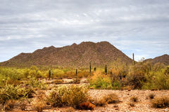Sonora Desert. In central Arizona USA Stock Photography