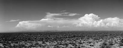 Sonora desert Stock Images
