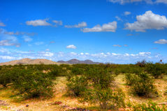 Sonora Desert. The Sonora desert in central Arizona USA Stock Image