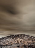 Sonora Desert. The Sonora desert in central Arizona USA Stock Photography