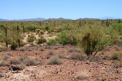 Sonora Desert Arizona with distant mountains. The Sonora desert and distant mountains in central Arizona USA royalty free stock photo