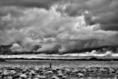 Infrared Sonora Desert Arizona. Sonora desert in Infrared central Arizona USA royalty free stock photography