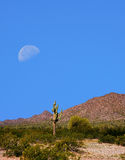 Sonora Desert Moon. Half moon over the southwestern USA Sonora desert and mountains Royalty Free Stock Image