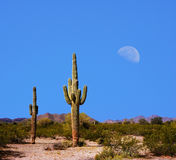 Sonora Desert Moon. Over the southwestern USA desert and mountains stock images