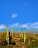 Sonora Desert Moon Royalty Free Stock Photo