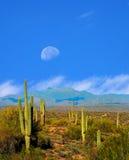 Sonora Desert Moon Royalty Free Stock Photo