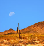Sonora Desert Moon. Desert moon over the southwestern USA Sonora desert and mountains Royalty Free Stock Images