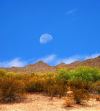 Sonora Desert Moon Royalty Free Stock Photos