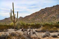 Sonora Desert Arizona San Tan Mountains. The Sonora desert and San Tan Mountains in central Arizona USA royalty free stock photos