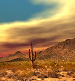 Sonora Desert Sunset. Sunset Sonora desert in central Arizona USA Royalty Free Stock Photography