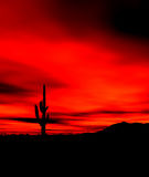 Sonora Desert Sunset. Saguaro and Sonora desert sunset in central Arizona USA Stock Photography