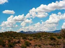 Sonora pustynia Obraz Royalty Free