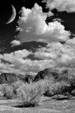 Sonora pustynia Obrazy Stock
