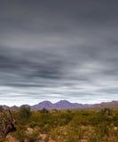 Sonora pustynia Zdjęcia Stock