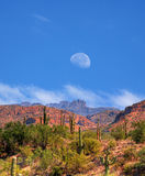 Sonora Pustynna księżyc Obrazy Stock