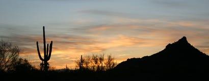Sonora sunrise. A sihlouette of a saguaro cactus at sunrise stock photography