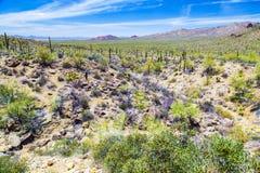 Sonora-Wüste in Arizona stockbild