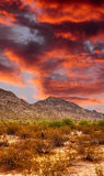 Sonora-Wüsten-Sonnenuntergang Stockfotos