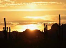Sonoran沙漠引起轰动的日落,场面的柱仙人掌稍兵 免版税库存照片