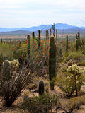 Sonoran沙漠远景 免版税库存照片