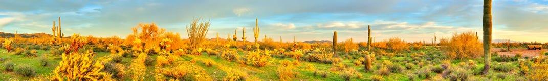 Sonoran沙漠 库存图片