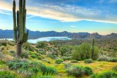Sonoran沙漠 免版税库存图片